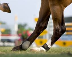 Signs Of Blindness In Horses Identify And Treat Equine Sacroiliac Problems Expert How To For