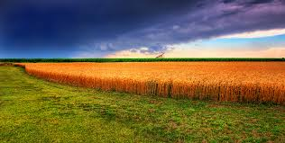 Kansas landscapes images Kansas landscape google search us states kansas pinterest jpg