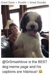Best Meme Page - 25 best memes about best dog best dog memes