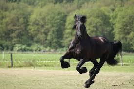 black mustang horse black horse 32519 2560x1713 px hdwallsource com