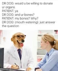 Dog Doctor Meme - dr dog imgur