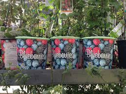 garden design garden design with how to avoid a common blueberry
