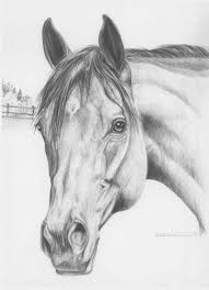 410 best horse drawings images on pinterest horse drawings