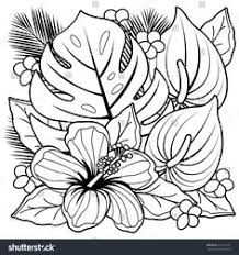 hibiscus coloring pages clip art of a coloring page of a