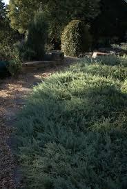 sydney native plants 52 best native garden plants images on pinterest native gardens
