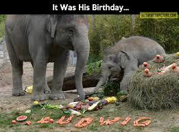 Elephant Meme - baby elephant birthday party