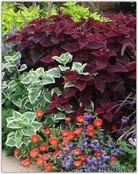 Fall Garden North Texas - annuals that like the heat weather plants southern garden