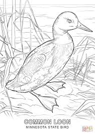 minnesota state bird coloring page free printable coloring pages