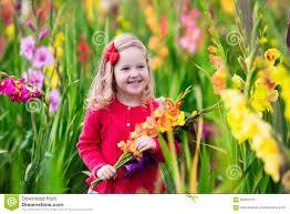 child picking fresh gladiolus flowers stock photo image 59487270