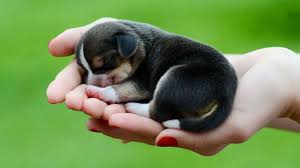 dog wallpapers 50 cute dogs wallpapers dog puppy desktop wallpapers hd
