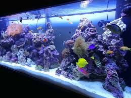 fish tank idea freshwater fish tank decoration ideas awesome