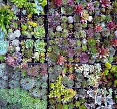 68 best vertical garden images on pinterest vertical gardens