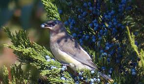 free images nature branch wing animal wildlife wild beak