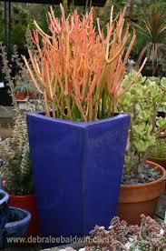 452 best succulent inspiration images on pinterest succulents