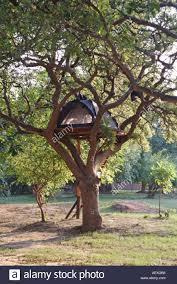 cing on a tree platform accommodation at flatdogs c south