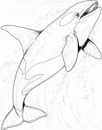 realistic sea animal coloring pages realistic animal coloring