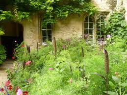 worcester college gardeners pennisetum glaucum purple majesty