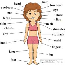 Human Anatomy Careers Parts Of Body With Diagram For Kids Anatomy Of Body Major