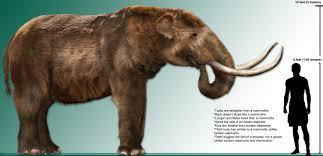 wooly mammoth african elephant size elephant 2017