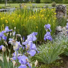 cura giardino primavera 10 consigli per la cura giardino e dell orto