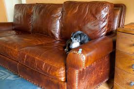 Leather Sofa And Dogs Leather Sofas And Dogs Radiovannes
