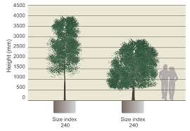 the concept of size index calculating the physical size of