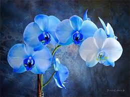 blue orchid flower pixelgraphs
