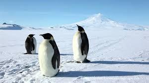 emperor penguins youtube