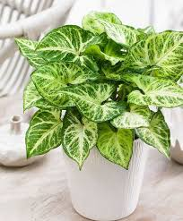 31 low light houseplants that you shouldn u0027t miss out hort zone