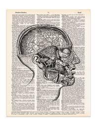 head anatomy drawing images learn human anatomy image