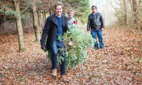 best places to pick a christmas tree near lexington ma