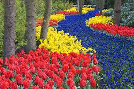 the most beautiful gardens in the world keukenhof garden in