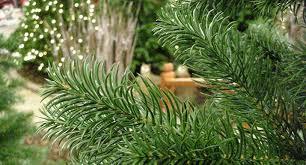 best artificial trees best artificial pe christmas trees garden world