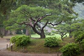 japanese tree by quit007 on deviantart
