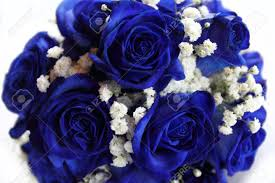 white and blue roses bouquet of blue roses on white background stock photo picture