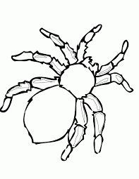 coloring page spider coloring home