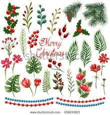 Christmas Plants Christmas Flowers Stock Images Royalty Free Images U0026 Vectors