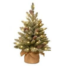 pine cones and berries trees hayneedle