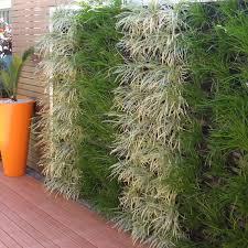 vertical green wall 1 looking at vertical growall garden systems