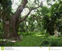 enchanted forest stock photo image 45537071