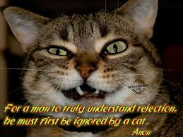 cool cat meme pin by omnispirit on cool cats pinterest meme pin