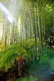 bambou feng shui feng shui dico archives suivre la voie alchimique du couple