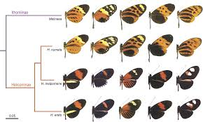 a conserved supergene locus controls colour pattern diversity in
