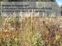 native plants for wildlife habitat and conservation landscaping native plant nursery highlight reedy creek environmental james