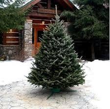 christmas tree delivery shop christmas trees five christmas trees real christmas