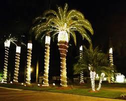 fantastic palm tree lights royal