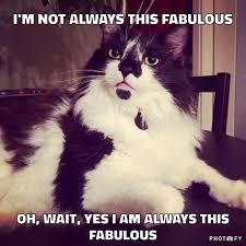 Cat Sitting Meme - rise and shine pet sitting home facebook