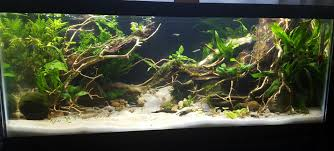 Green Machine Aquascape 20 Gallon Long Finally Planted 5 16 Update Aquascaping World