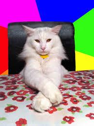 Evil Cat Meme - evil cat bonbon meme generator