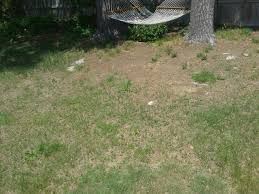 advice for lawn growing grass tree front yard garden trees